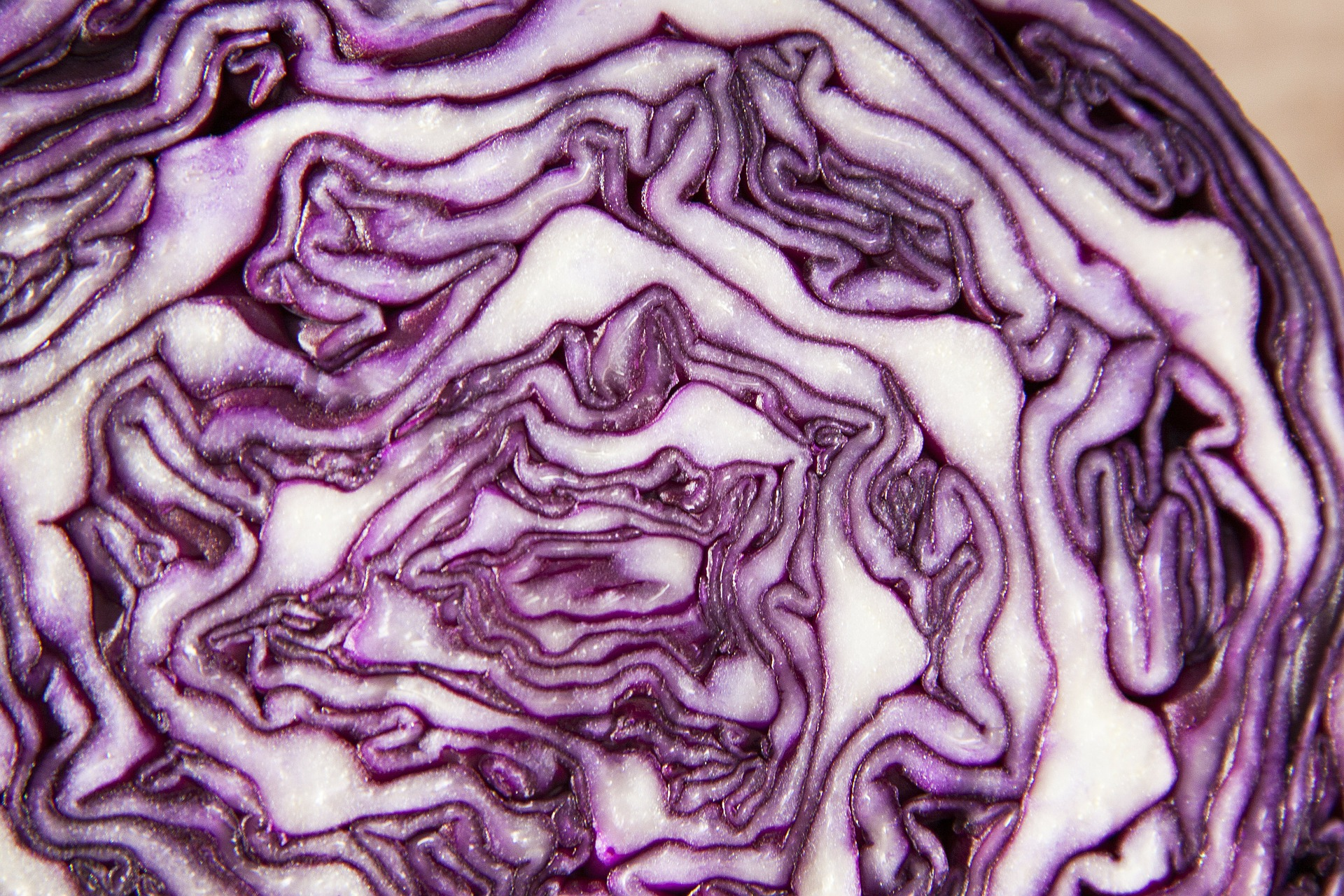 red-cabbage-73364_1920